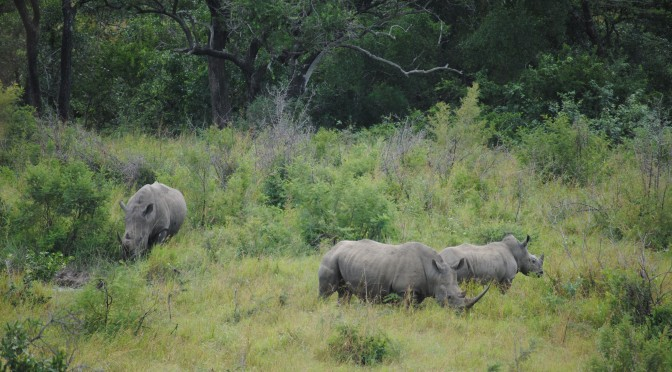 Tracking the Elusive Animals at Hluhluwe-Imfolozi Park