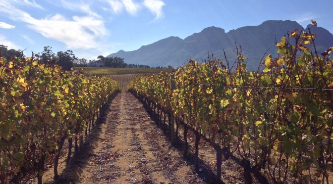 Tasting the Cape Winelands