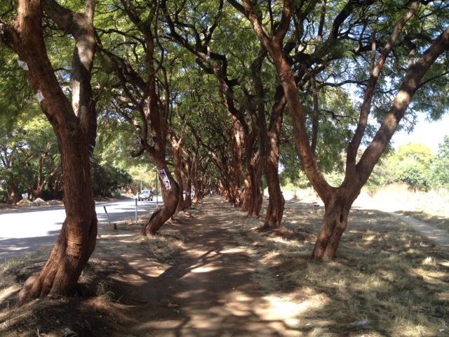 harare-trees