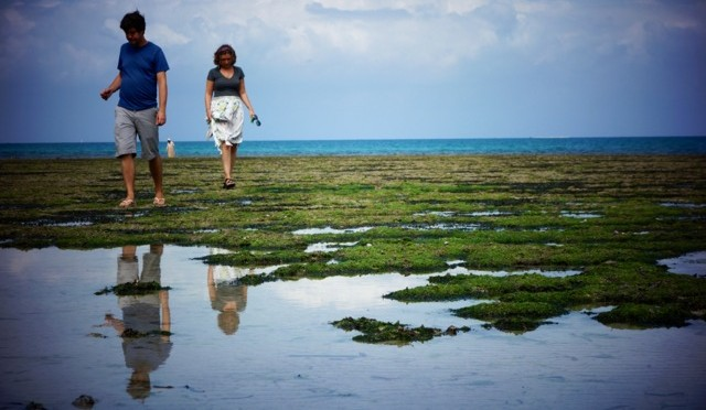 A Zanzibar Road Trip: Monkeys & Beaches