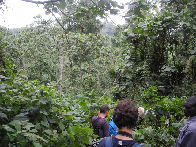 Descending into the jungle.