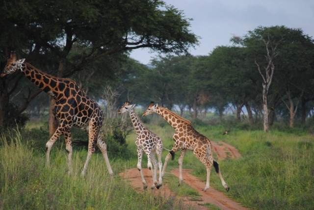 Murchison Falls National Park, Uganda